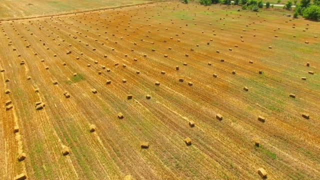 packed haystacks after harvest, aerial video, drone point of view - haystack stock videos & royalty-free footage