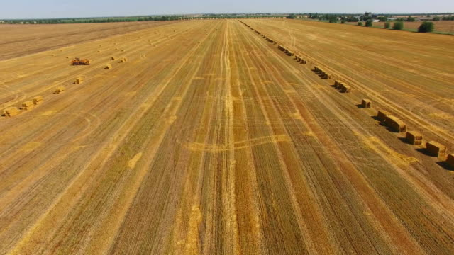 packed haystacks in wheat field after harvest, aerial video - yellow background stock videos and b-roll footage
