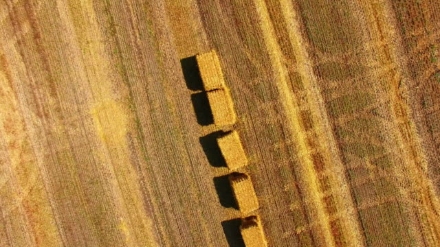 packed haystacks in wheat field after harvest, aerial video - fieno video stock e b–roll