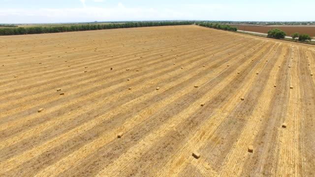 収穫後の麦畑の航空写真: パックされた干し草の山 - 梱包機点の映像素材/bロール