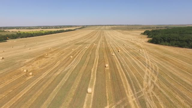 aerial: packed haystacks in wheat field after harvest - hay field stock videos & royalty-free footage