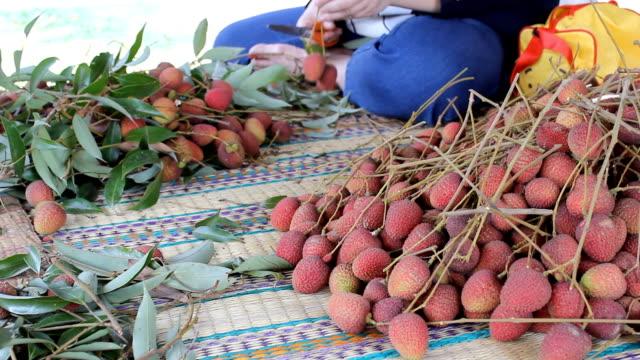 vídeos de stock e filmes b-roll de saco frutas na tailândia. parte 1 - lichia