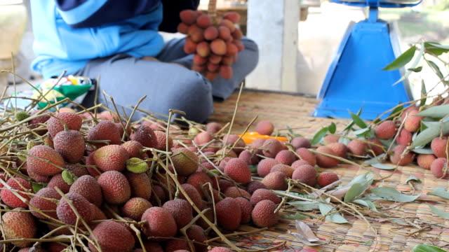 vídeos de stock e filmes b-roll de saco frutas na tailândia. parte 2 - lichia