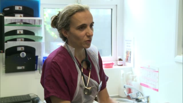 Paddington the Pygmy hedgehog found in London station Vet examining dog in surgery Cat stroked by gloved hands of nurse Caroline Alan interview SOT...
