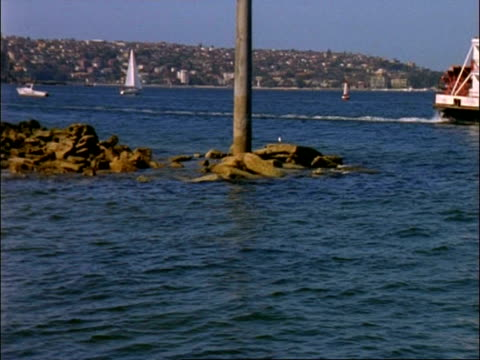 MS paddle steamer moving along in Sydney Harbour, Australia
