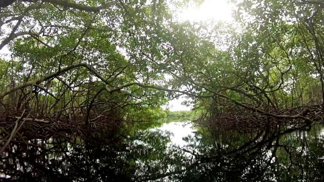 pov of paddling under lush green mangrove forest along ocean coast. - mangrove tree stock videos & royalty-free footage