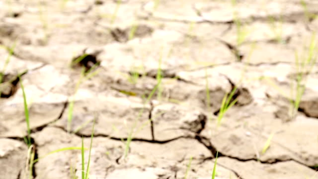 Paddy field, dry soil, drought land, hot weather