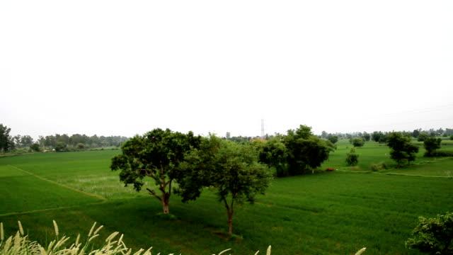 paddy field - haryana stock videos & royalty-free footage