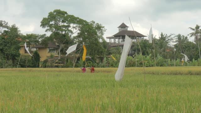 Paddy Ubud,Bali,Indonesia