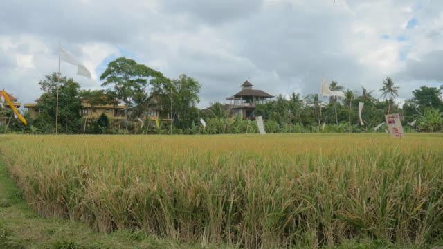 paddy ubud,bali,indonesia - ubud district stock videos & royalty-free footage