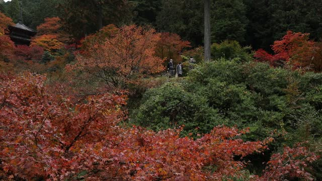 pagoda is seen through trees displaying their autumn colours at kogenji temple on november 10, 2020 in tanba, hyogo, japan. domestic tourists have... - pagoda stock videos & royalty-free footage