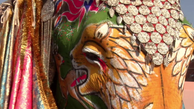 ECU, Painted elephant (Elephas maximus) at annual elephant festival, Jaipur,Rajasthan, India
