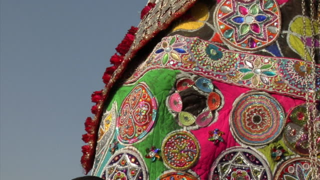 ecu, painted elephant (elephas maximus) at annual elephant festival, jaipur,rajasthan, india - ornate stock videos and b-roll footage