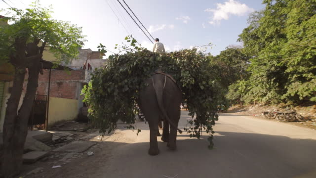 stockvideo's en b-roll-footage met painted elephant carrying rider and tree branches - india - alleen één mid volwassen man