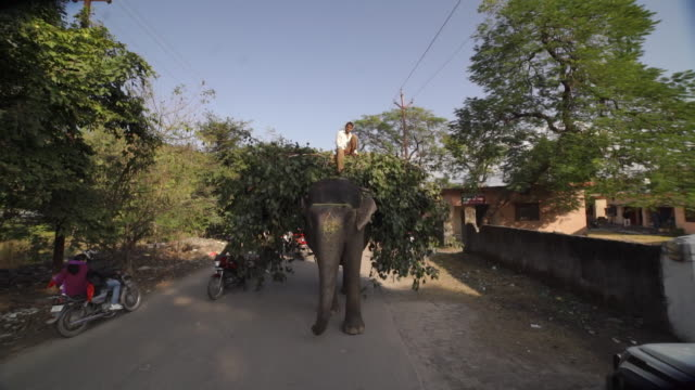painted elephant carrying rider and tree branches - india - domestic animals stock videos & royalty-free footage