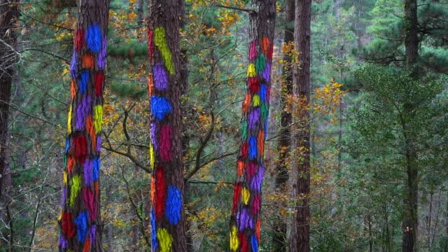 vídeos y material grabado en eventos de stock de painted forest in oma valley - cultura mediterránea
