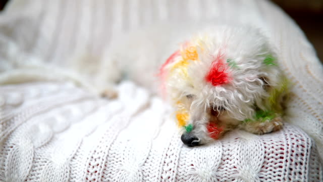 vídeos de stock e filmes b-roll de painted puppy - amontoar