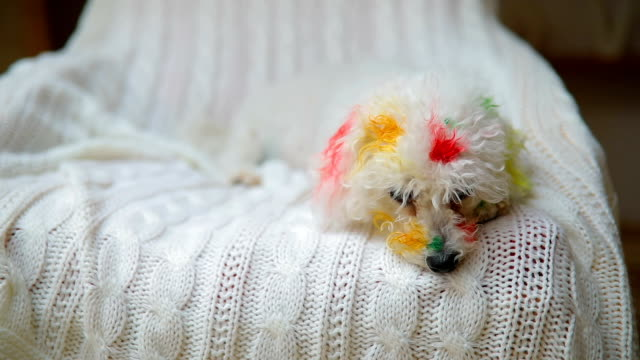 vídeos de stock, filmes e b-roll de pintado do cachorrinho - messy