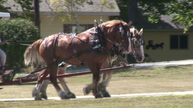 pair horses - hd 1080/60i - animal drawn stock videos & royalty-free footage