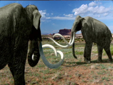 pair of bull mammoths, usa - extinct stock videos and b-roll footage