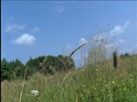 pair of large blue butterflies flutter over meadow poland - butterfly stock videos & royalty-free footage