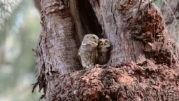 Pair of owl birds,low angle view.