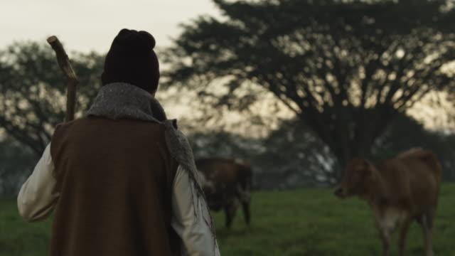 vídeos de stock e filmes b-roll de pakistan cattle herder - só homens maduros