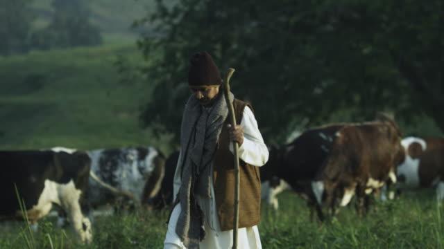vídeos de stock, filmes e b-roll de pakistan cattle herder - malaysian culture