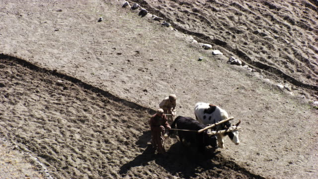 pakistan: pakistani farmers plowing, zoom out - wild cattle stock videos & royalty-free footage
