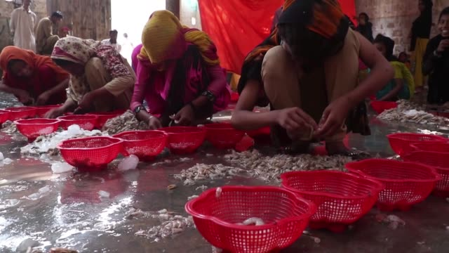 pakistani children and women sort and peel shrimps at a shrimp peeling factory in karachi fish harbour on april 22 2017 in karachi pakistan - karachi stock videos and b-roll footage