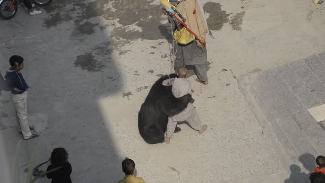 vidéos et rushes de pakistani street entertainer use tricks to encourage his pet bear to dance as children enjoys the show in the city of rawalpindi pakistan on november... - dancing bear