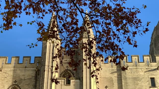 palais des papes with tree branch in avignon - 宮殿点の映像素材/bロール