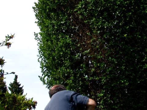 vídeos y material grabado en eventos de stock de pal: corte del hedge - sólo hombres maduros