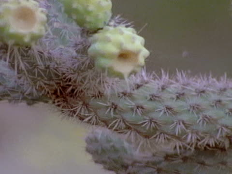 Pale green and pink flower buds sit on the tip of a cactus plant and yellow wildflowers blow in the wind