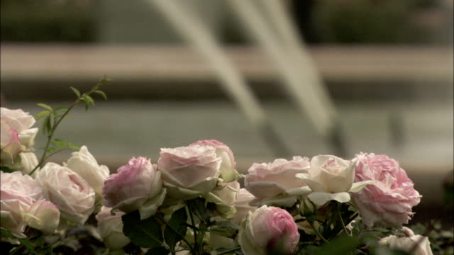 Pale pink and white roses bloom near a fountain. Available in HD.
