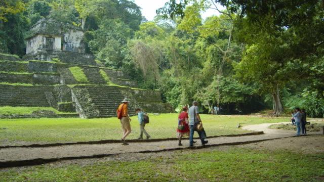 palenque mayan ruins. chiapas, mexico. tourists walking along natural parkland - staircase stock videos & royalty-free footage