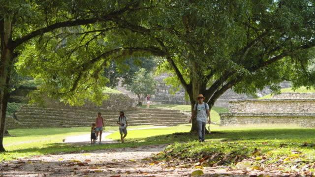 vídeos de stock e filmes b-roll de palenque mayan ruins natural parkland b-roll. chiapas, mexico - palenque