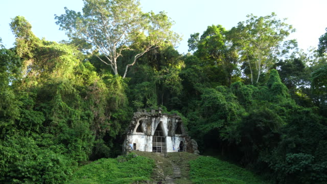 vidéos et rushes de palenque, the temple of the foliated cross - maya
