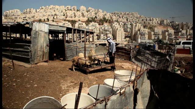 Palestinian farmer refuses to sell land Olive tree PULL FOCUS buildings of Har Homa Israeli flag flying from building David Hadari EXT Said Eyid...