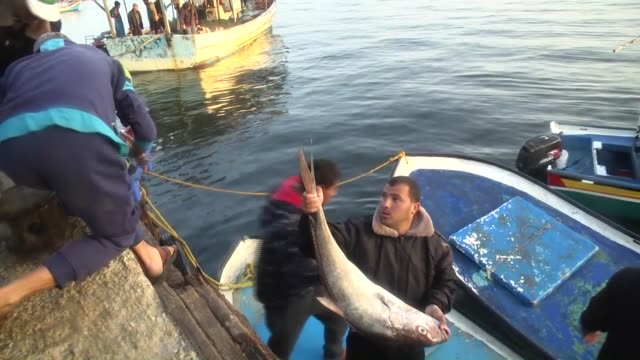 palestinian fishermen sail their boats in the mediterranean sea on april 04 2016 after the fishing zone off some parts of the gaza was expanded from... - fischer stock-videos und b-roll-filmmaterial