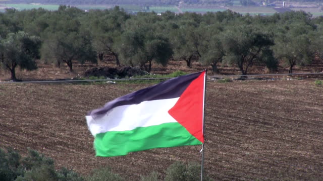 palestinian flag waving in a field of olives, burqin village, jenin, palestine - palestinian flag stock videos & royalty-free footage