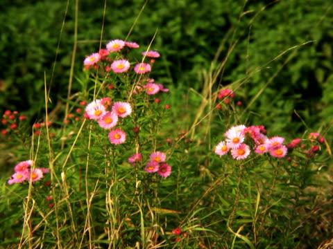 vídeos y material grabado en eventos de stock de pal: flores - grupo pequeño de animales