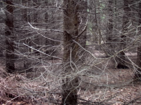 pal:forest - named wilderness area stock videos & royalty-free footage