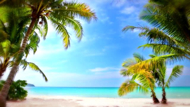 Palm and beach.