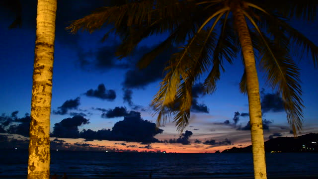 palm and beautiful sky at night