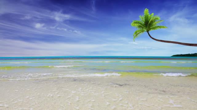ヤシの木や海の