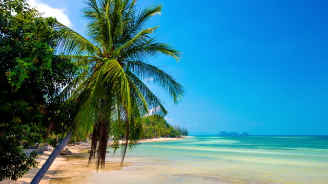 palm and tropical beach - ko phangan stock videos and b-roll footage