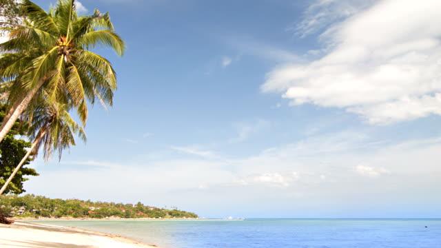 Palm beach and sea