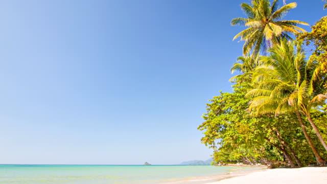 palm beach - pazifikinseln stock-videos und b-roll-filmmaterial