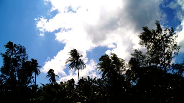 palm beach - desert island stock videos & royalty-free footage